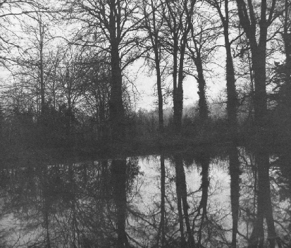 Trees Reflected , 1842-43 William Henry Fox Talbot