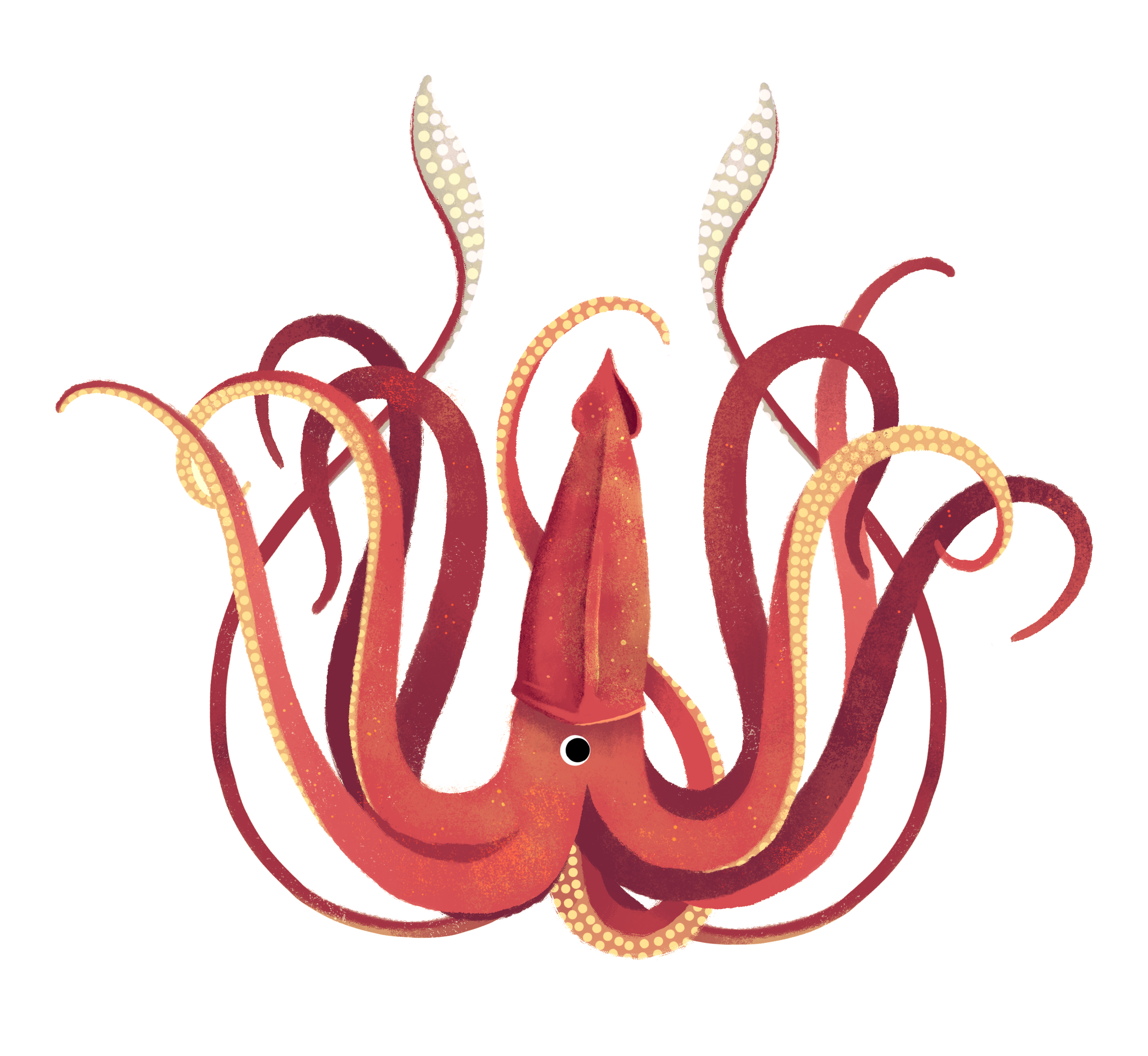 giantsquid.jpg