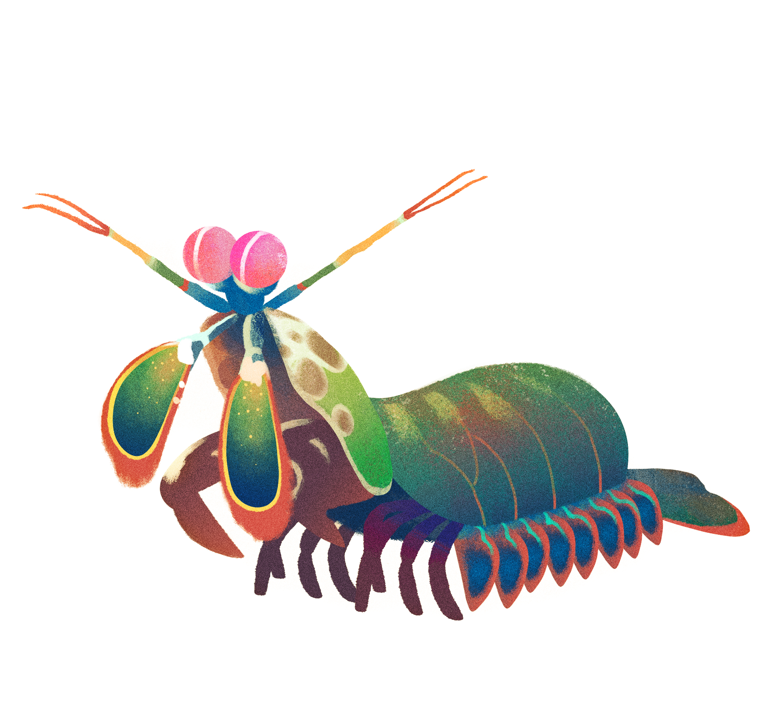mantisshrimp.jpg