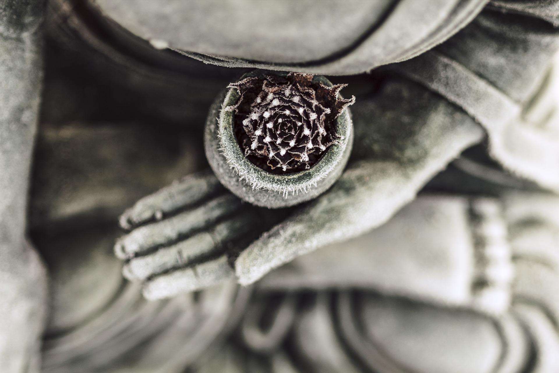 meditation hand .jpg