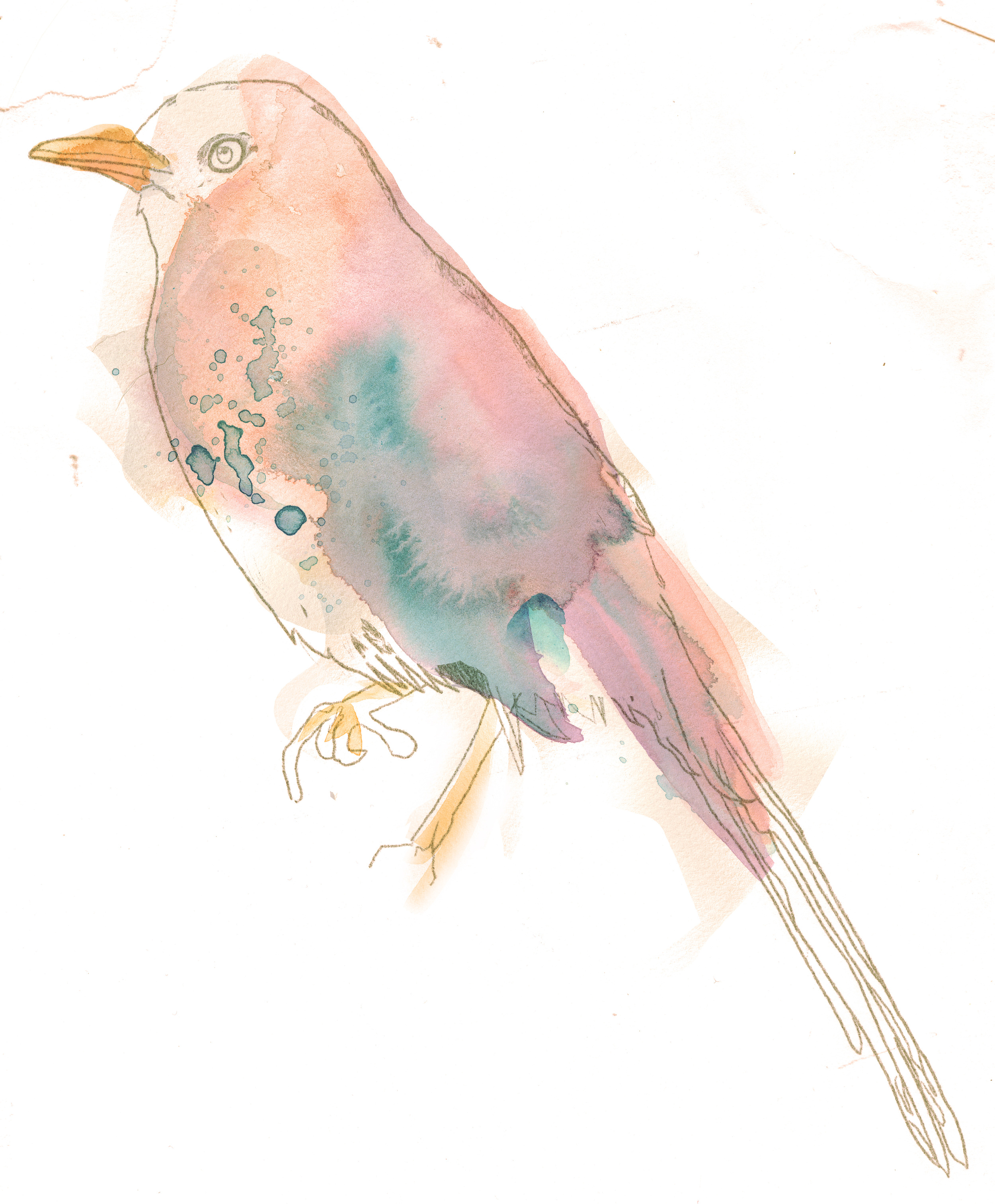 bird-watercolor2.jpg