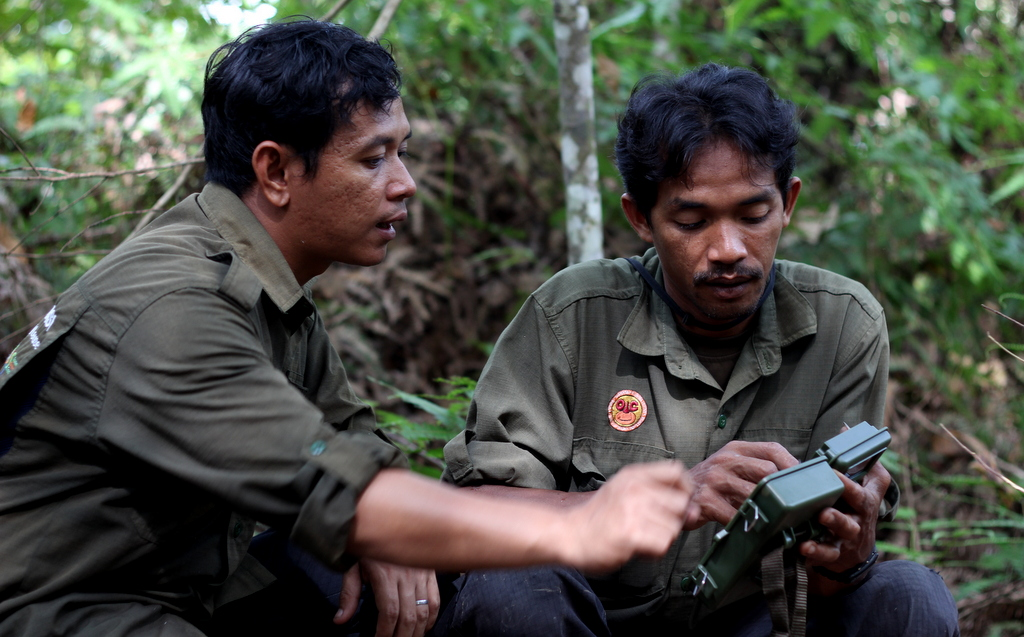 Camera Traps being deployed in Leuser by OIC forest guards Indonesia.