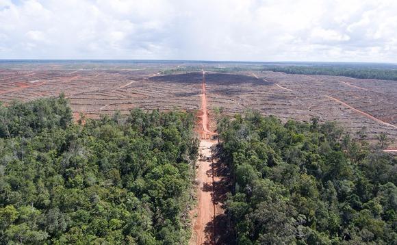 korindodeforestationpalmoil-580x358.jpg