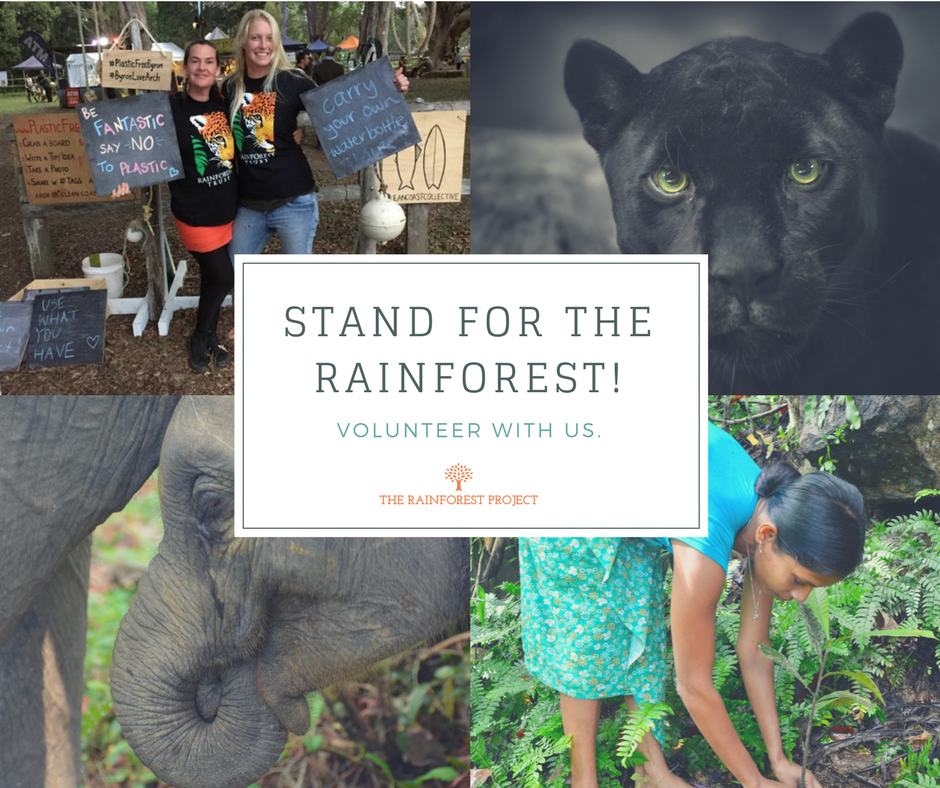 StandFor the Rainforest.png