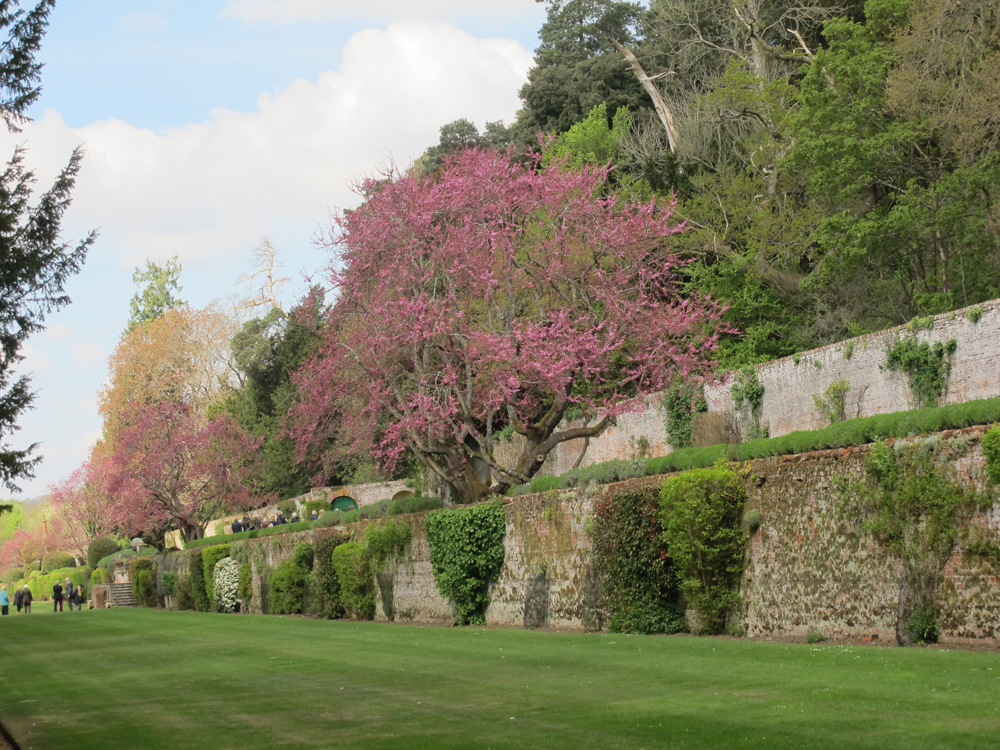 The lower terrace showing the  Cercis siliquastrum  trees on the upper terrace with the bath house and exedra to the left of the image