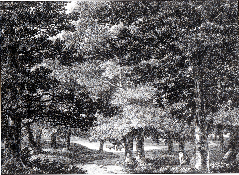 A scene in Ashted Park  by Thomas Herne (1744-1817).  Etching.  Engraved by Letitia Byrne (1805).  SHC