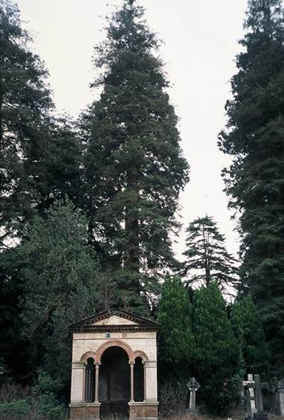 Brookwood Mausoleum and mature planting