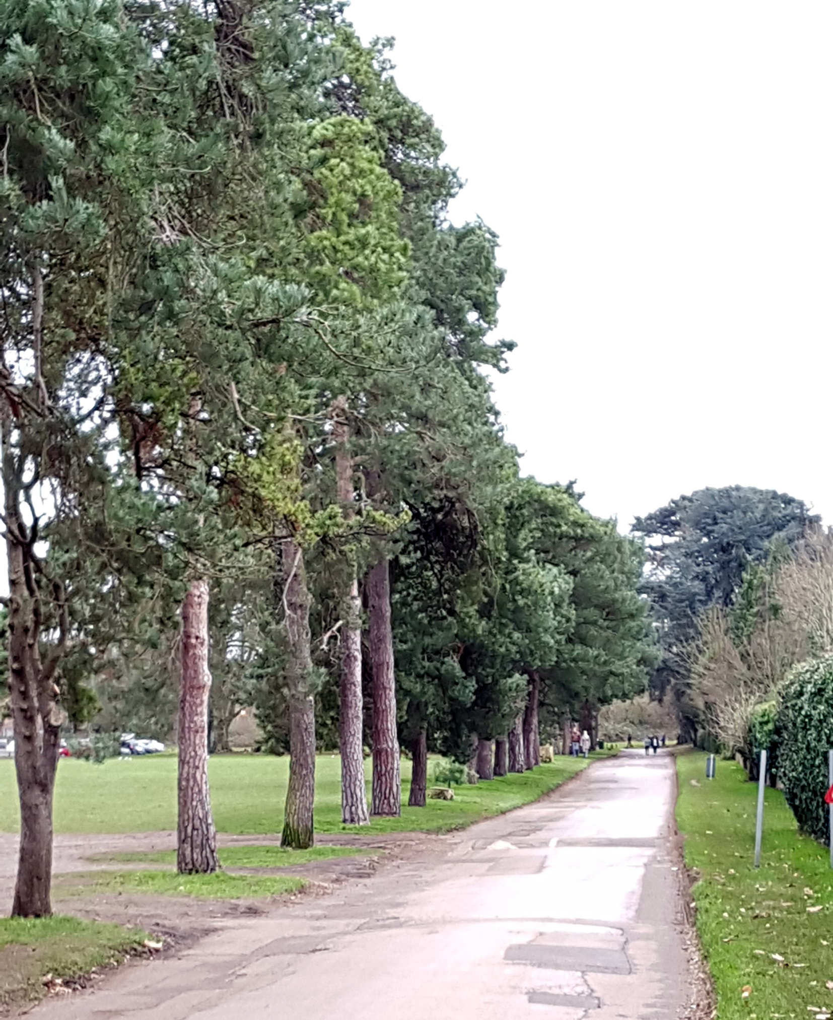 The fir walk in January 2019
