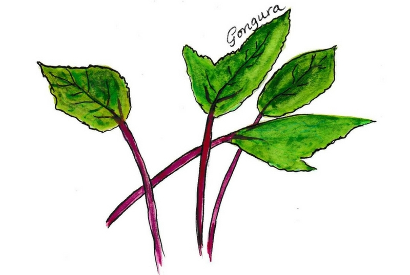 Illustration of Gongura leaves