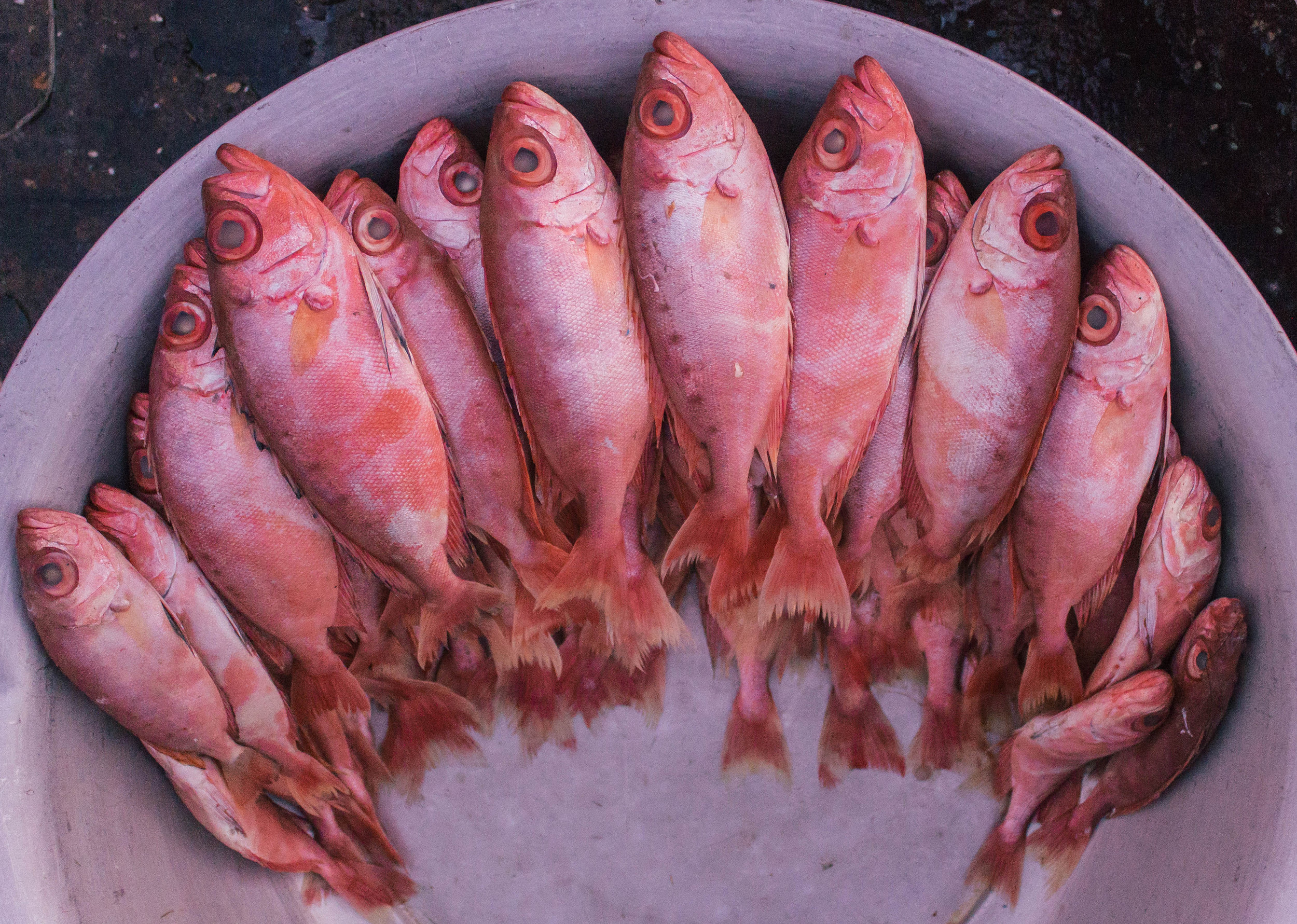 The Indian red snapper, known locally as tambusa, is mostly exported. But steamed or used in a curry, it is known to be superior to its American counterpart.