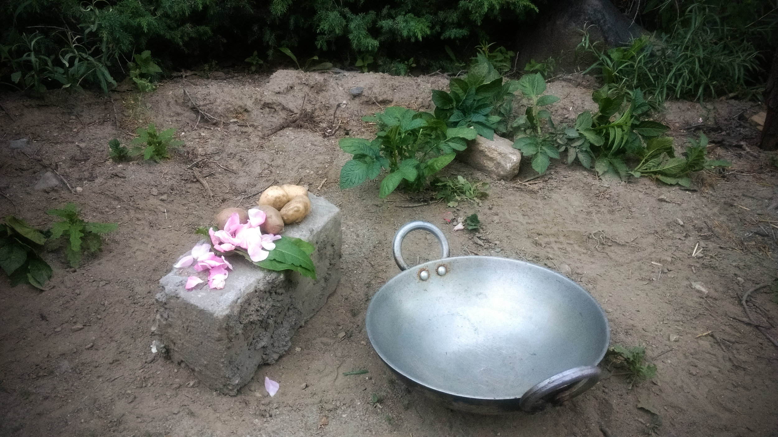Wild rose and foraged potatoes for khichdi.