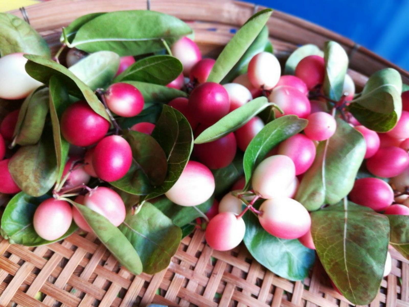 Karonda: Native Indian fruits by Simrit Malhi
