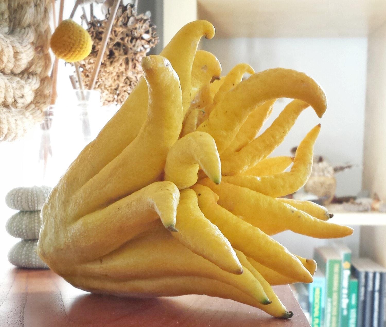Buddha's Hand: Native Indian fruits by Simrit Malhi