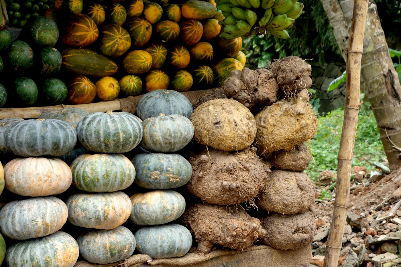 Pumpkin plays a versatile role in Bengali cuisine