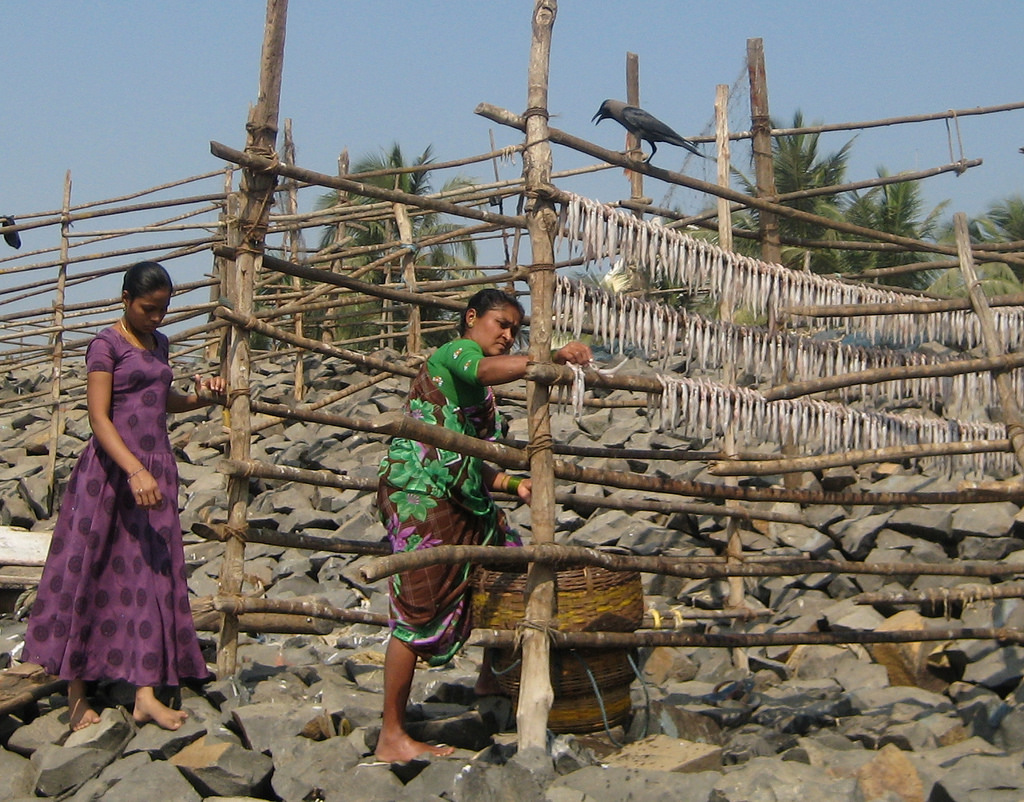 Women hanging bombil out to dry. Image by  Madhav Pai .