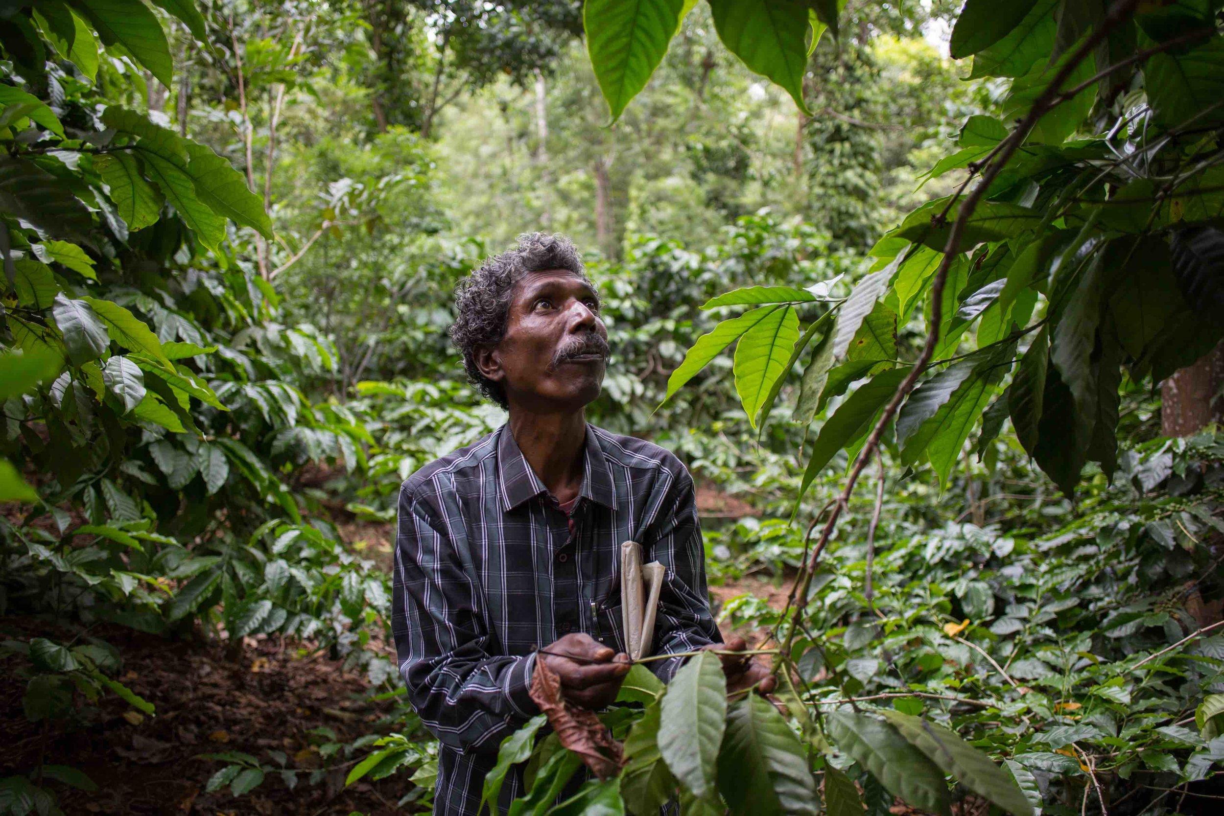 M. Sannarangegowda on a coffee farm in Biligiriranganatha Swamy Temple Wildlife Sanctuary  Image credit: Vivek M