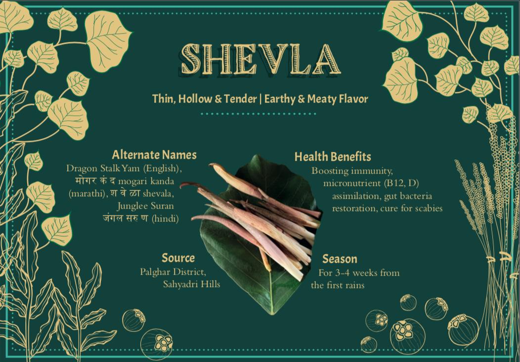 Shevla, A Taste of the Wild