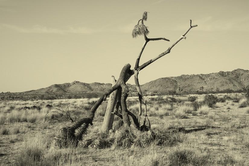 joshua-tree-003.jpg