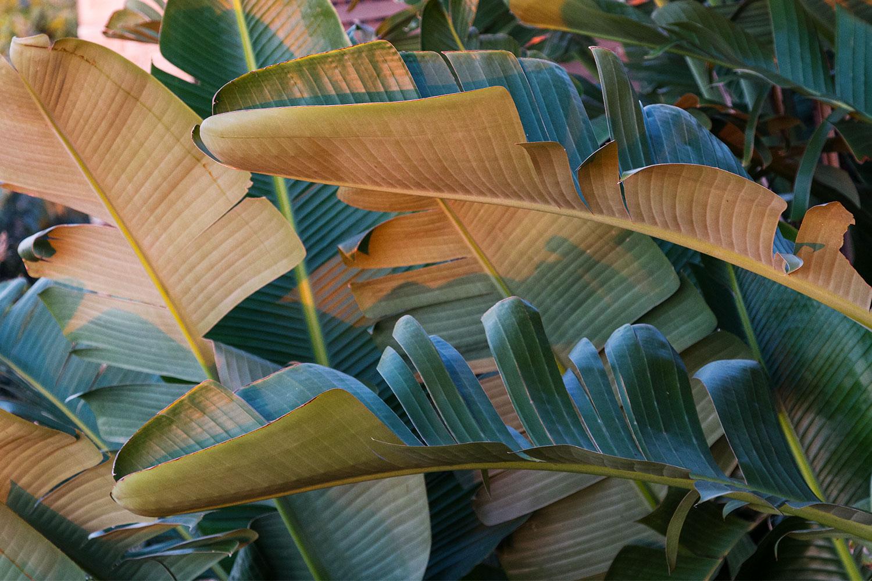 Sunrise-Palms.jpg