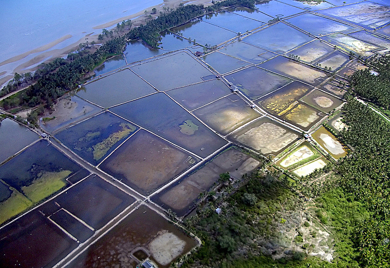 Coastal Shrimp farm. Image: Sebastien Blanc/AFP/Getty Images