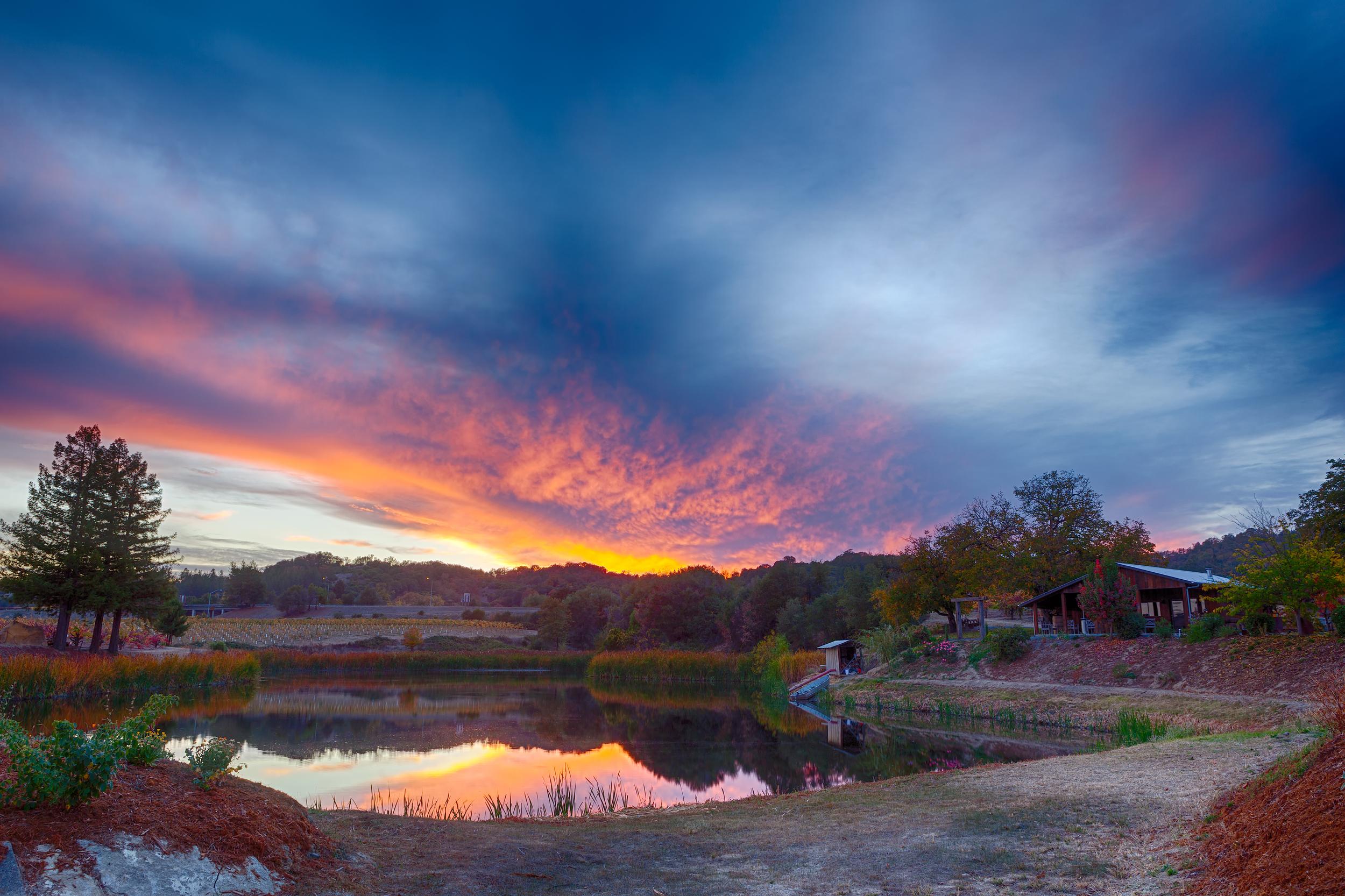 Testa Vineyards - Calpella, California