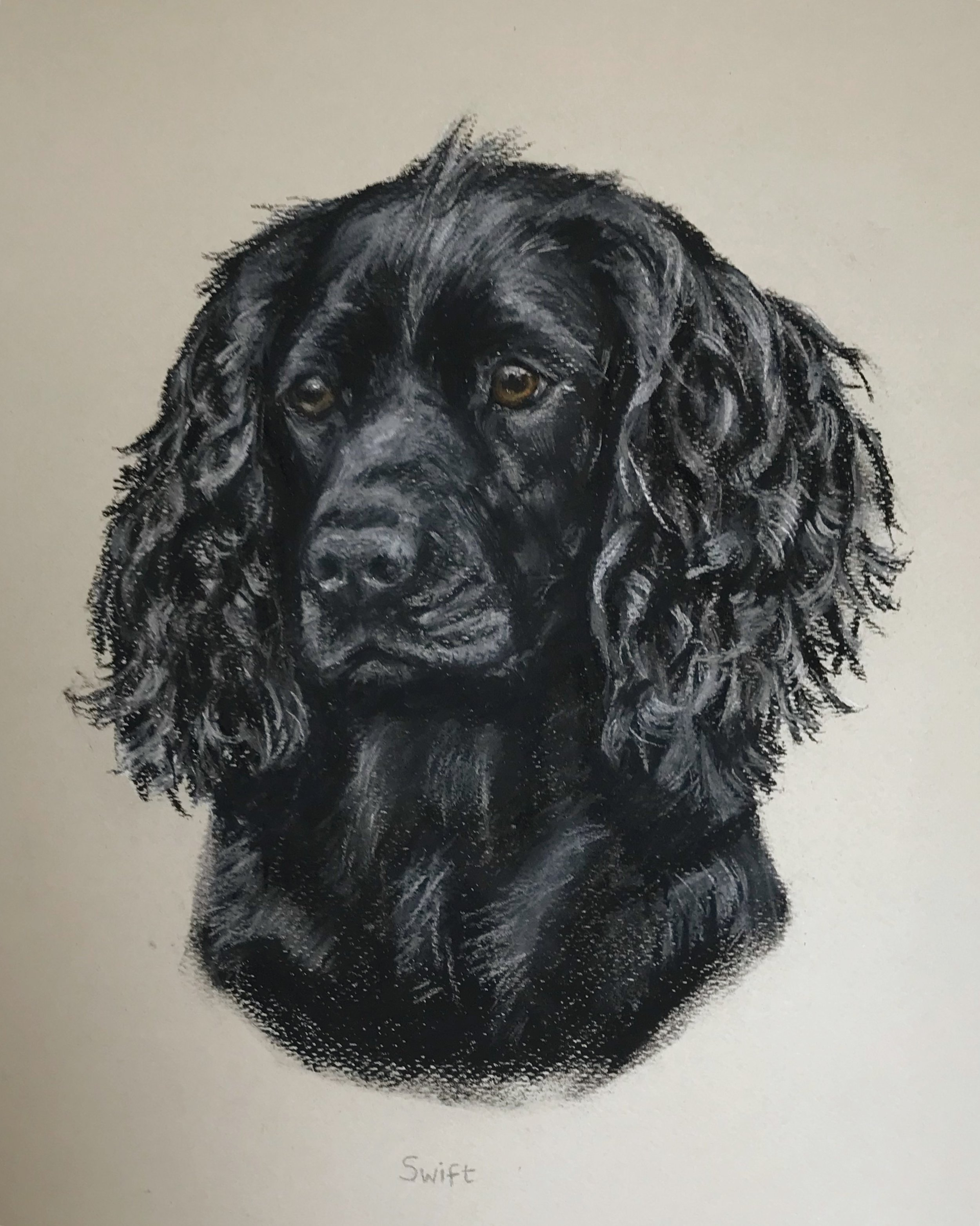 'Swift' Pastel on paper
