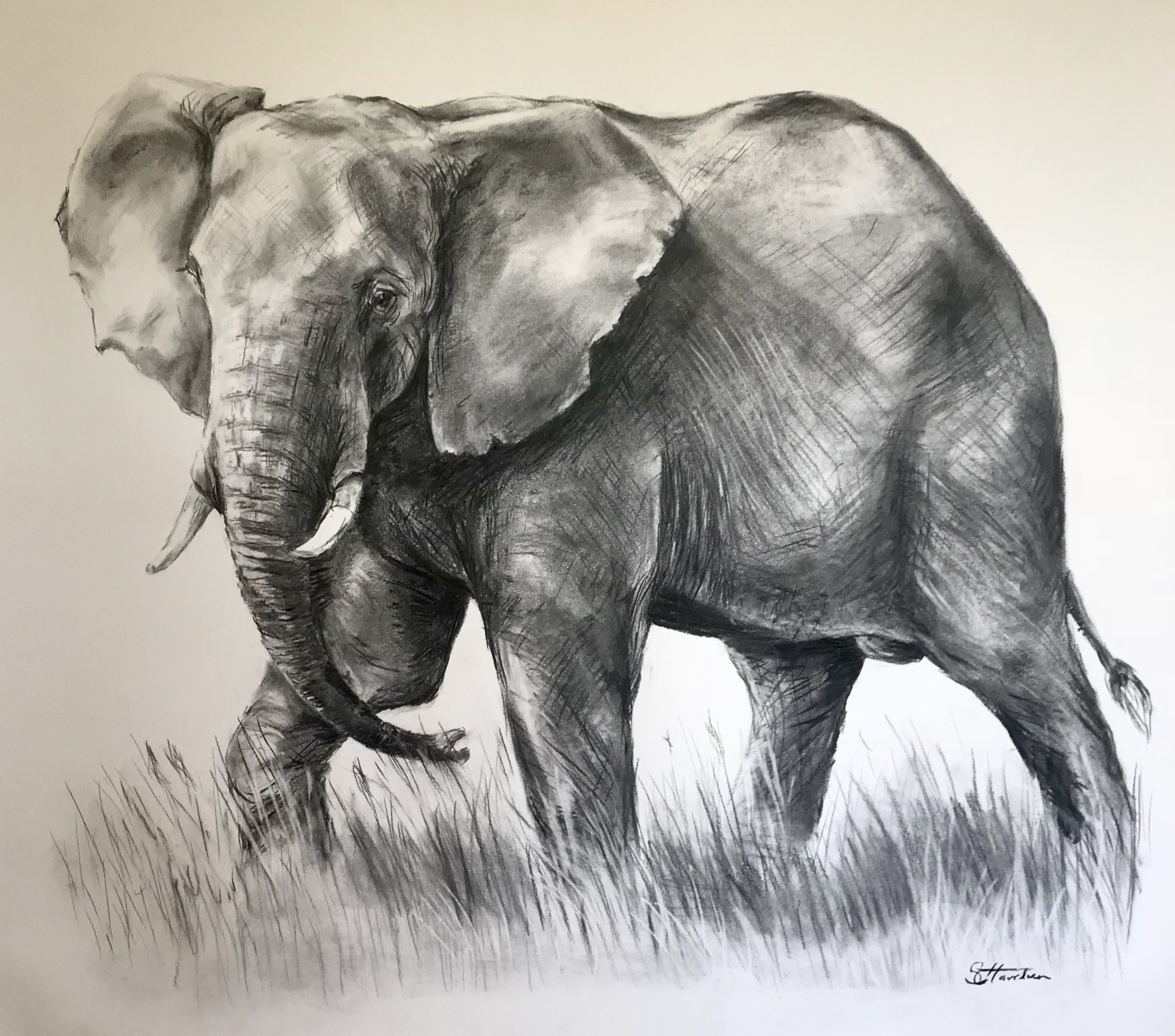 Close Encounter, charcoal 120cmX90cm SOLD