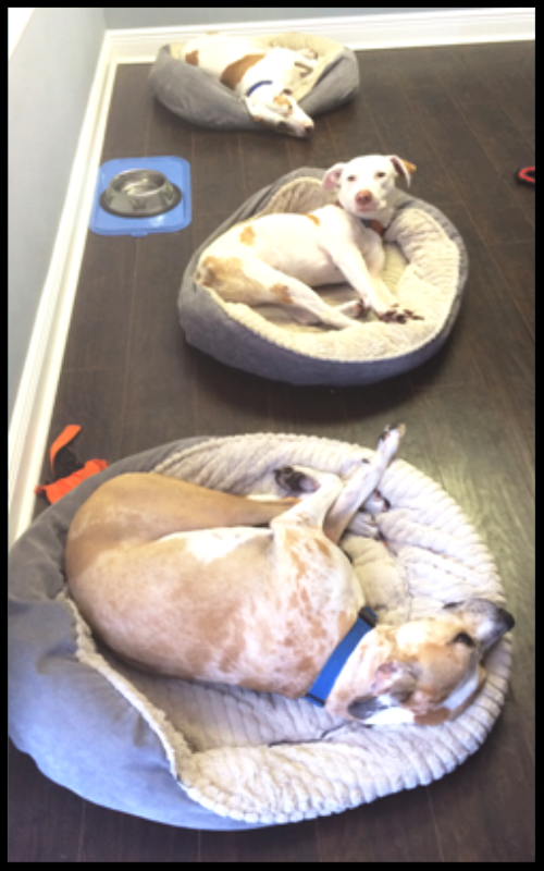 Mojo, Ditto & Ginger enjoying a hard day at the office