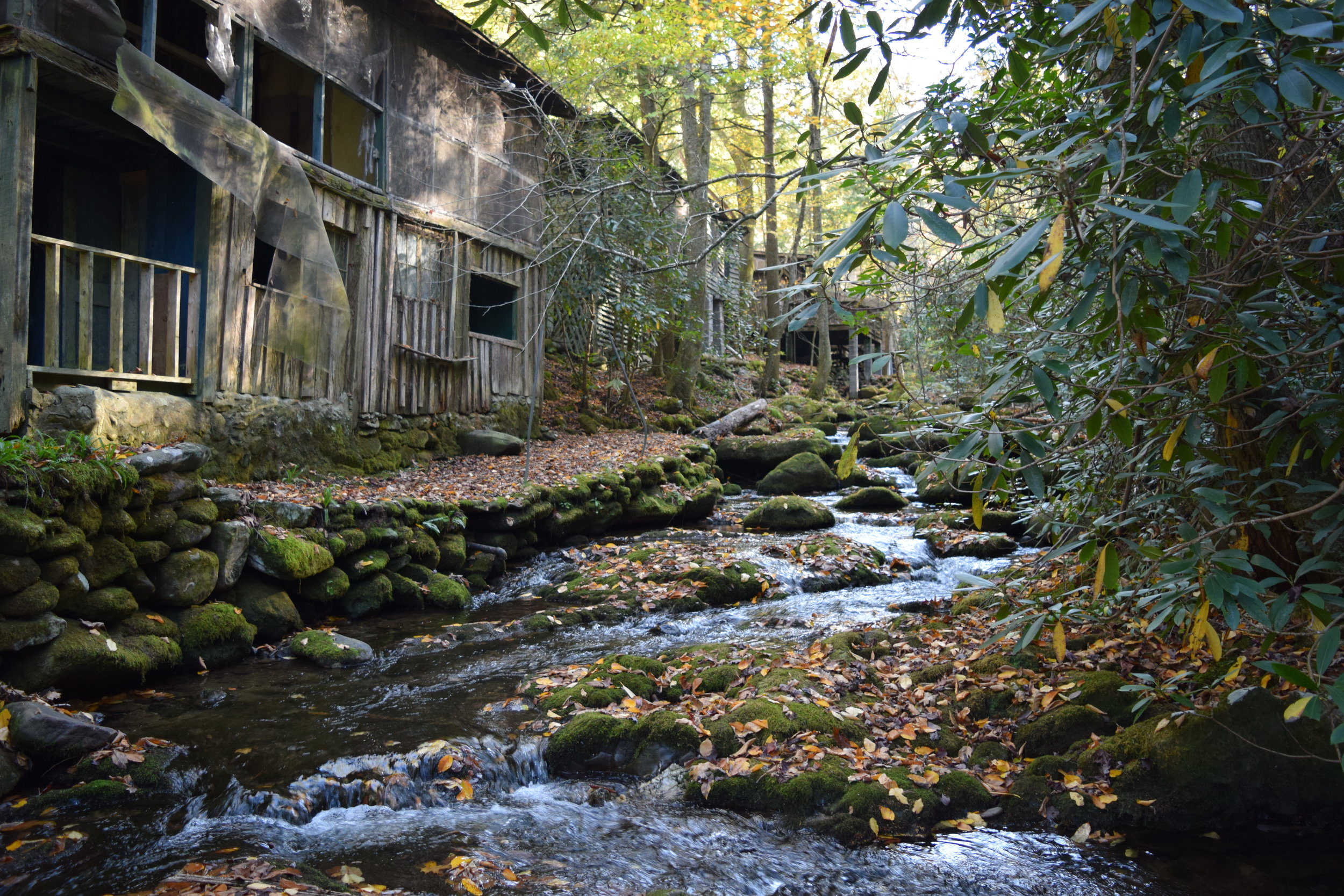 JAKES CREEK, SOCIETY HILL - ELKMONT, GREAT SMOKY MOUNTAINS NATIONAL PARK