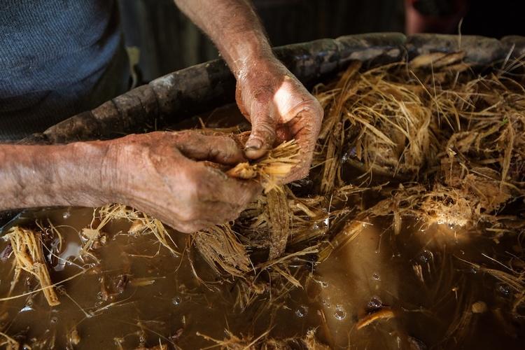 Fermenting begazo. Photo courtesy of Joanna Pinneo