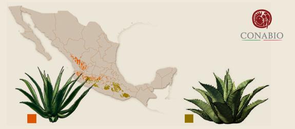 Image taken from CONABIO website