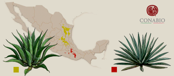 Americana Map.png