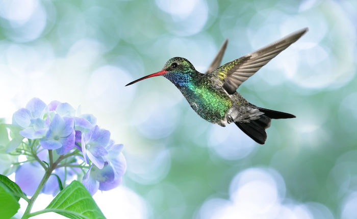 Hummingbird-Spirit-Animal-1.jpg