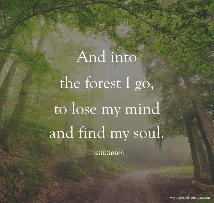 9cd40631f37ecfbf89f3877a5d09619c--forest-quotes-forests.jpg