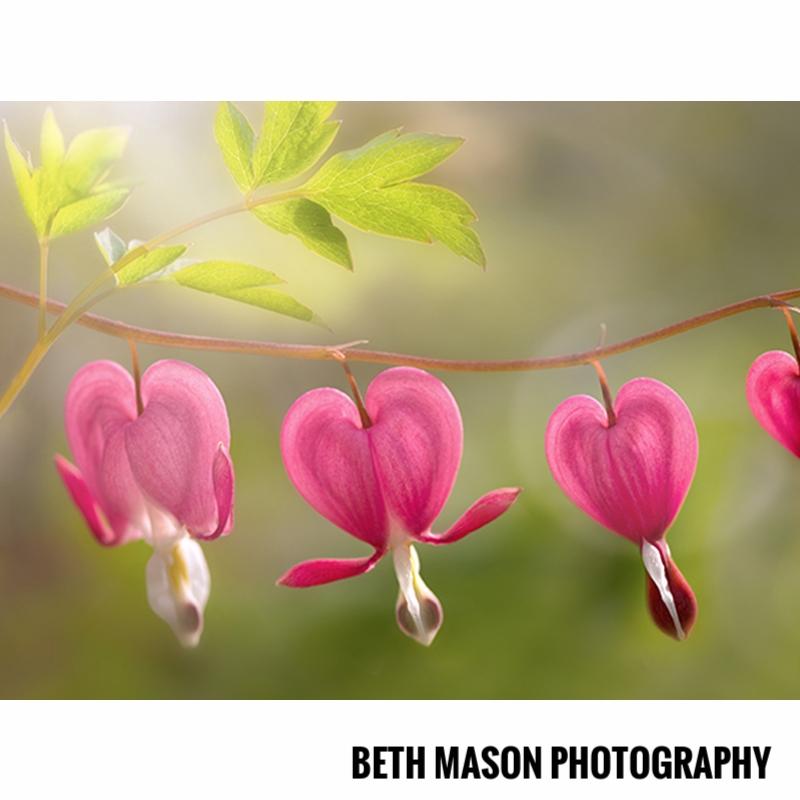 Beth Mason Photography