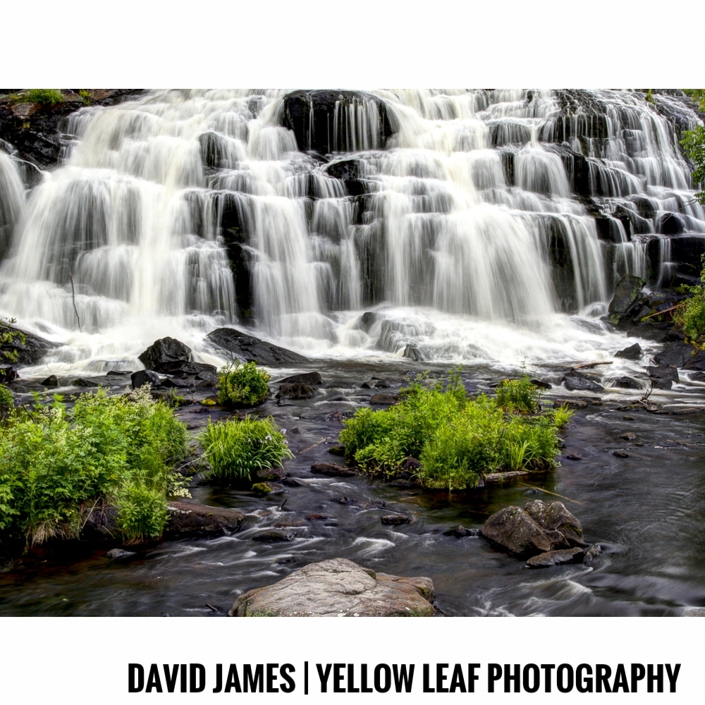 David James | Yellow Leaf Photography