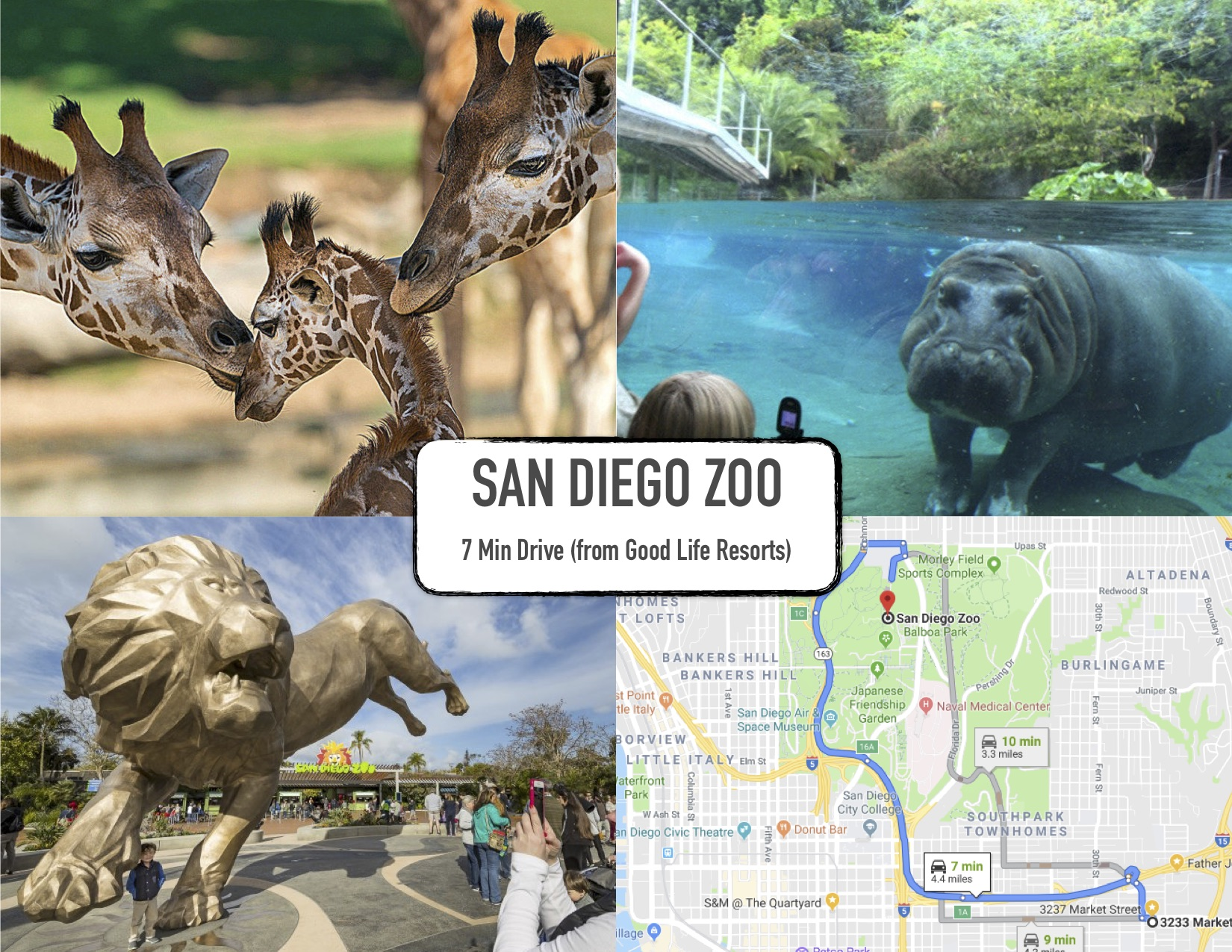 Good Life Resorts - guidbook - SAN DIEGO ZOO - market.jpg