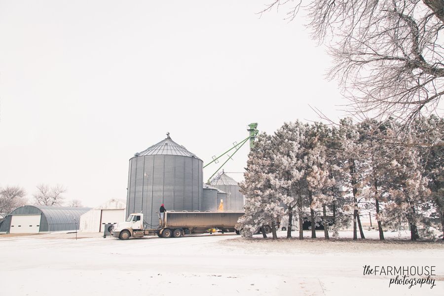 hauling corn truck