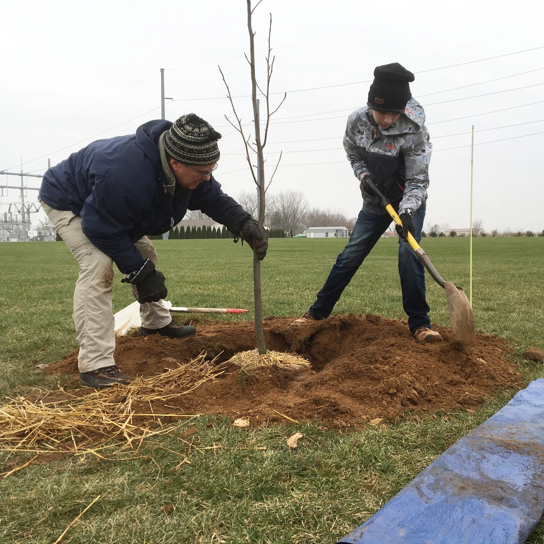Planting the first trees at the Complex in January 2017.