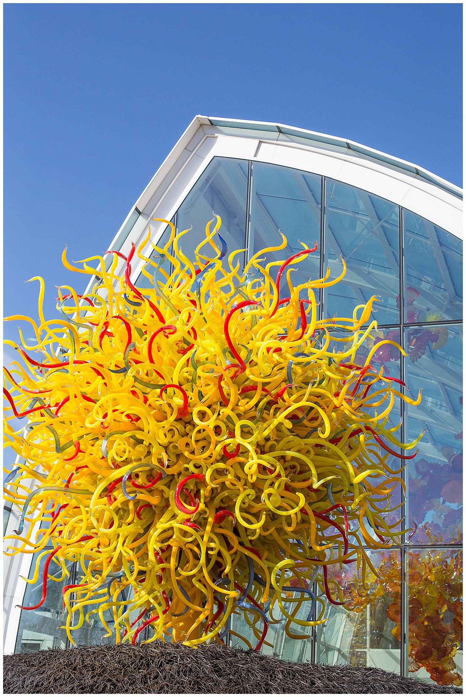 The Chihuly Gardens are absolutey amazing!