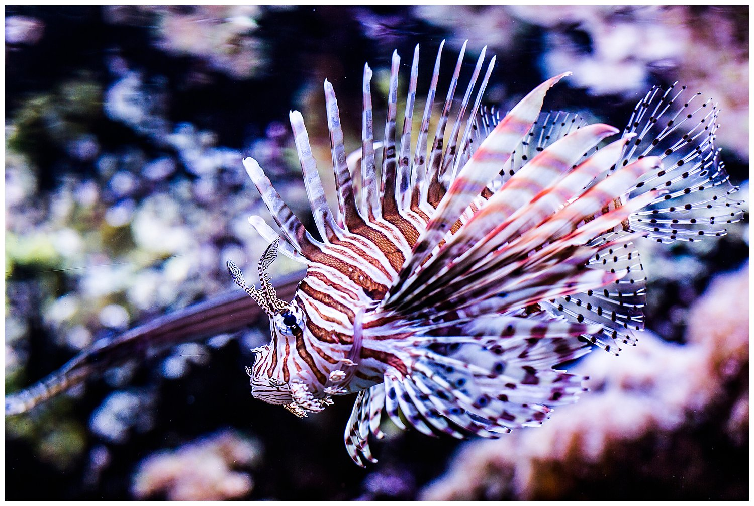 fish in aquarium Seattle Washington