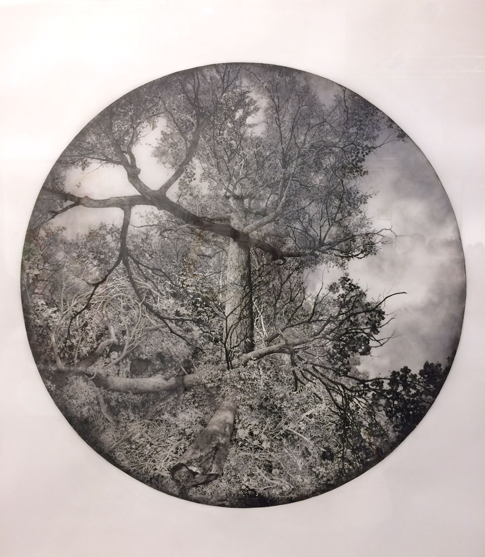 Rachael Pease,  Vast Memory , 2014, Ink on frosted Mylar, Beaux-Arts Des Ameriques, Montreal, CA