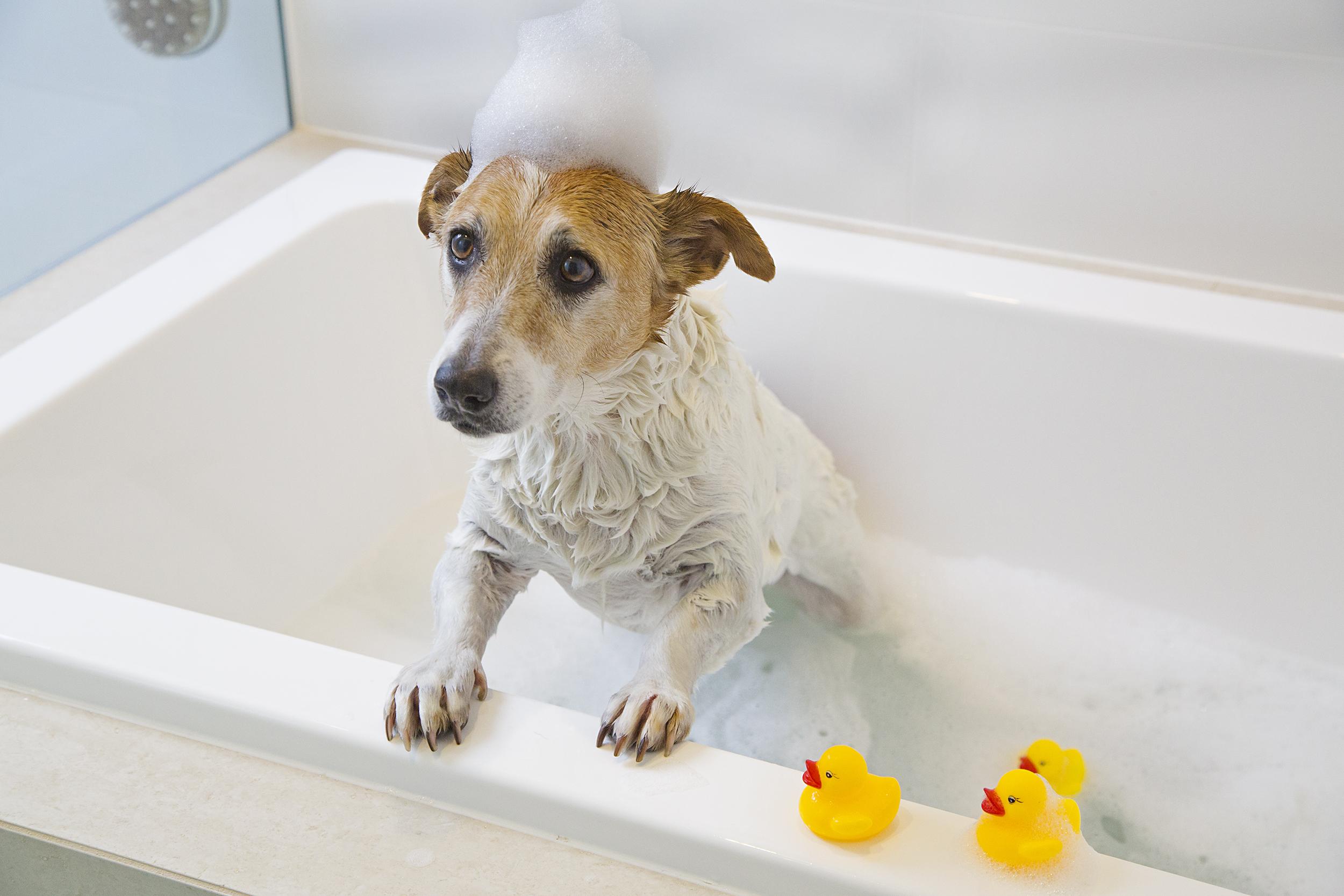 _Snoop bath 8A1353 (1).jpg