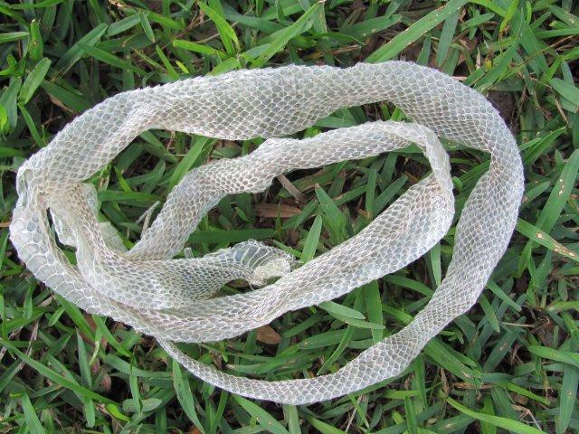 snake3.jpg