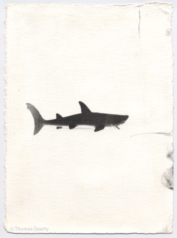 Shark, from the series Iconotypes  Unique liquid-emulsion print on watercolor paper