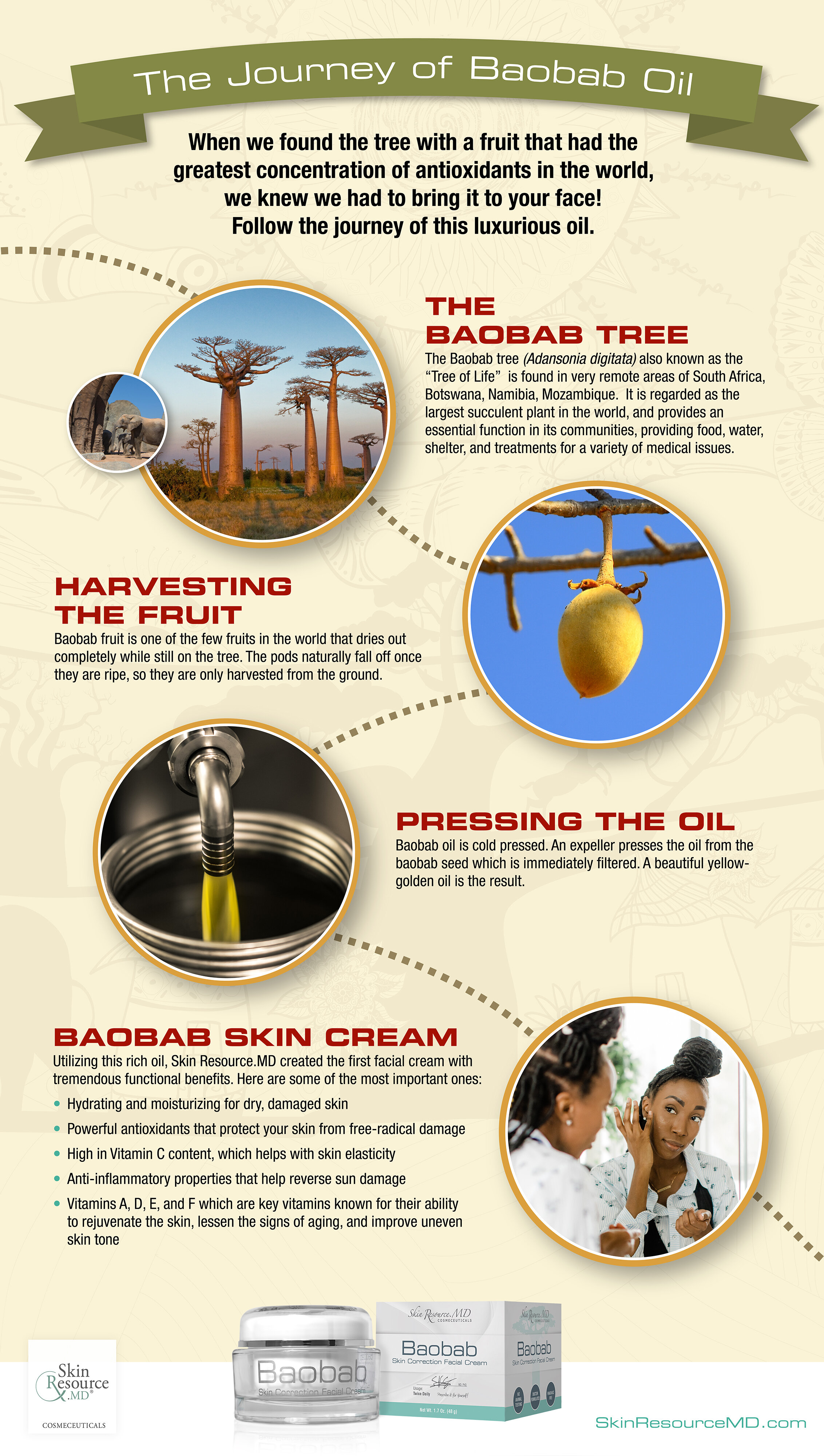 Baobab oil journey infographic2.jpeg