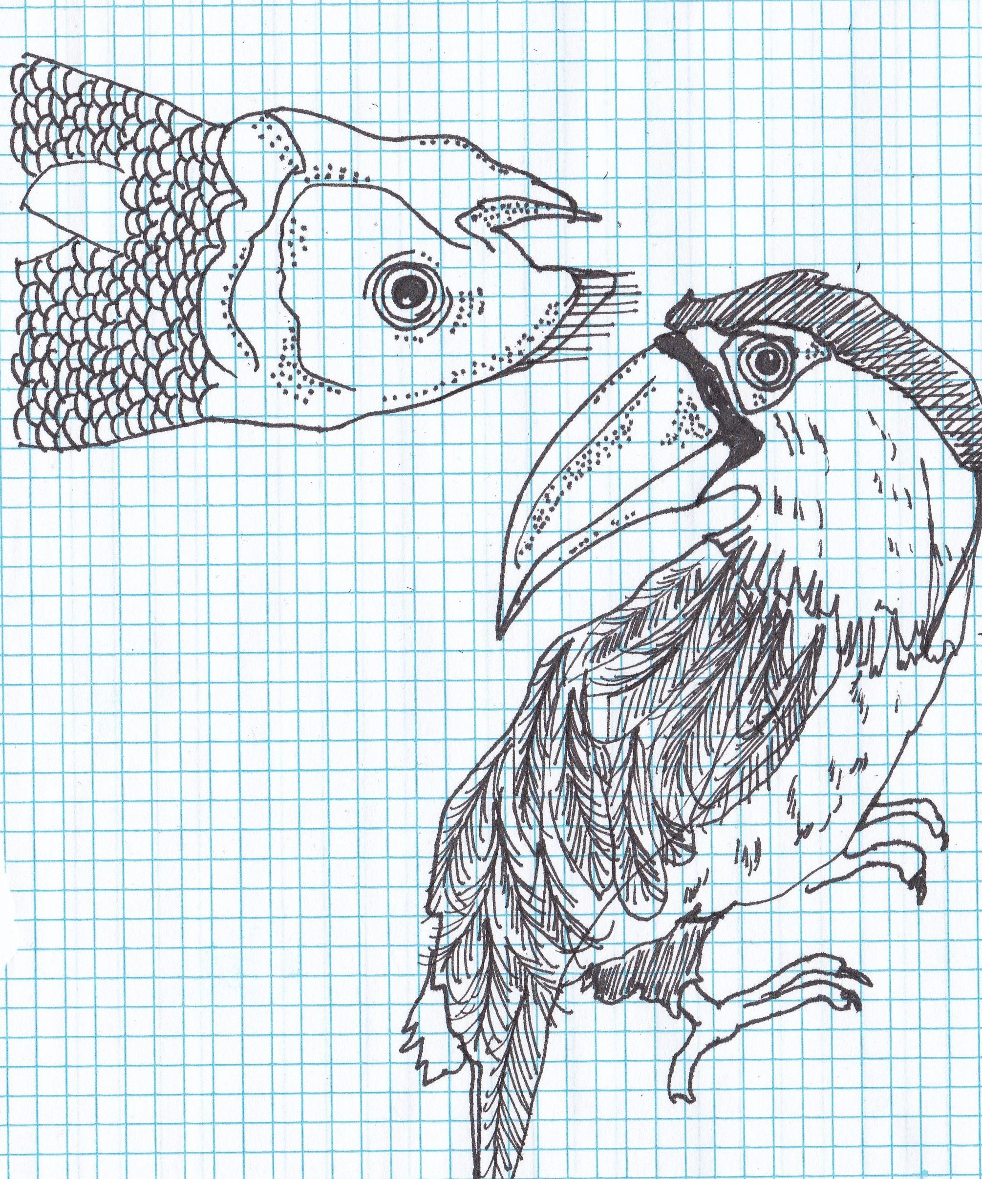 ANIMAL 26.jpg