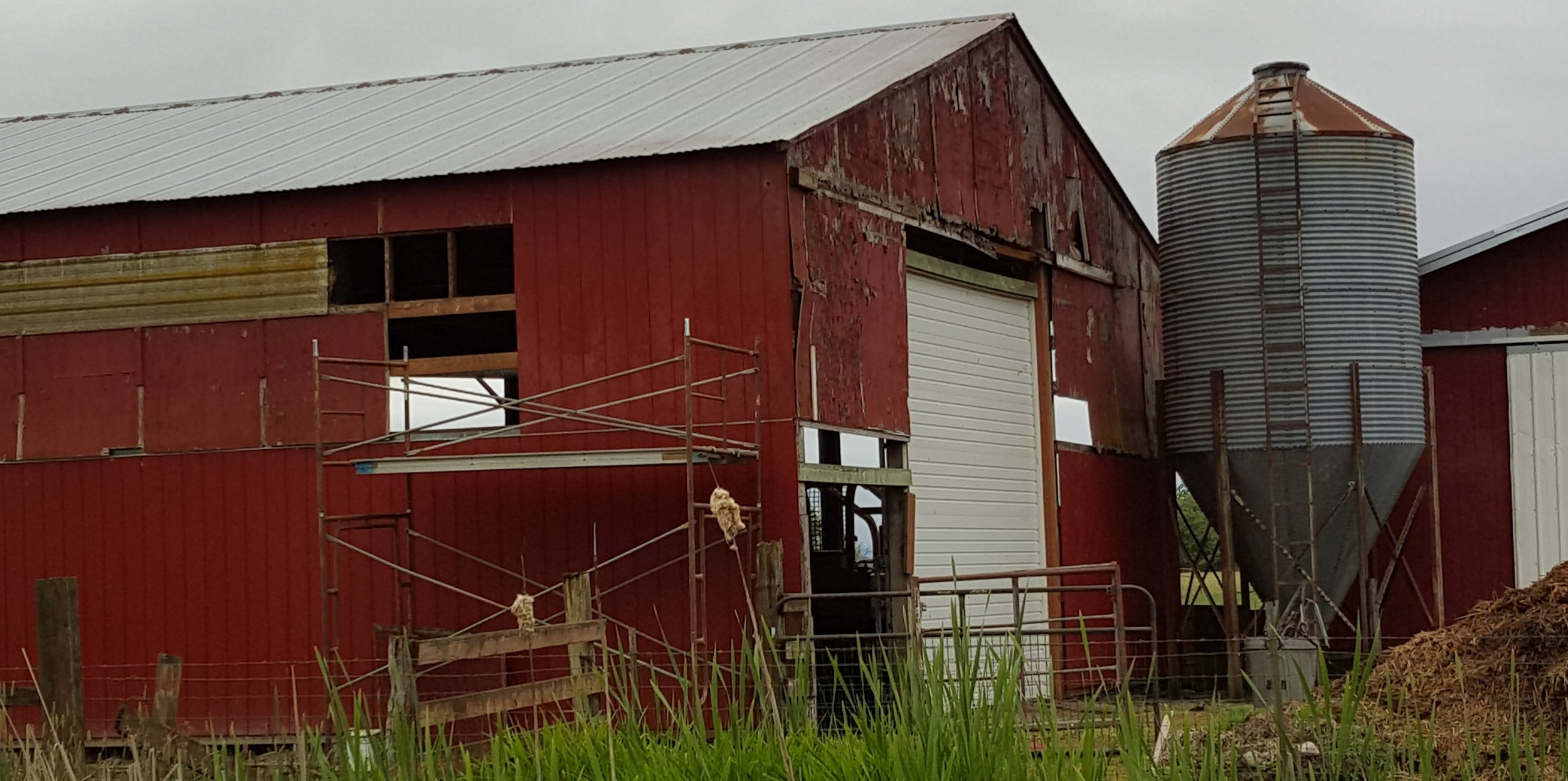 Two years of re-siding sheep barn thanks to our son, Nils Dunder, and his friend, Dave.