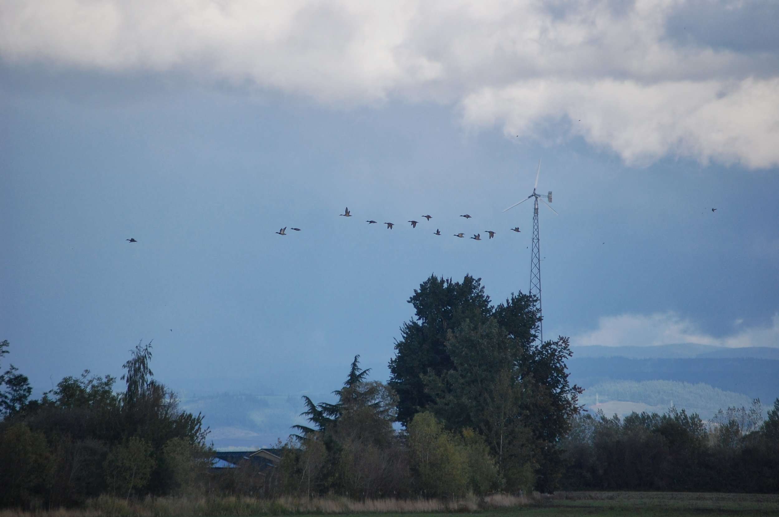 As the year ends, migrating waterfowl return to Santiam Valley Ranch.