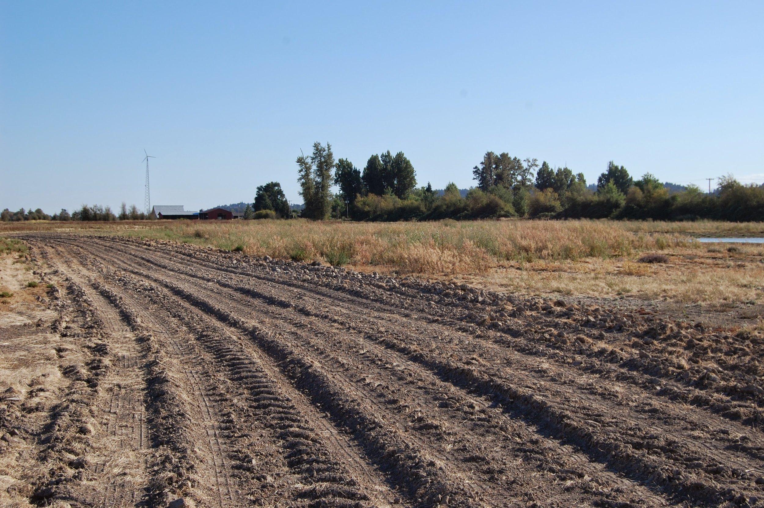 NE corner field. Disking in selected areas.